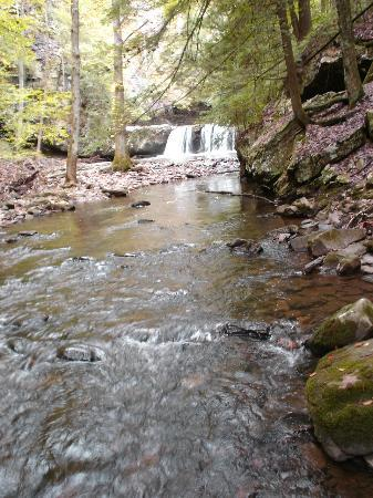Grundy Forest Natural Area : sycamore falls