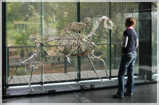 Museum of Natural History: man and horse