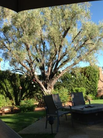 Desert Riviera Hotel: my favorite tree, and the hummingbirds are amazing to watch