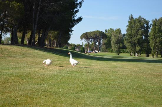 Golf Grand Avignon: Vous avez votre carte verte vous 2 ?