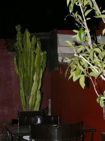 Riad argan