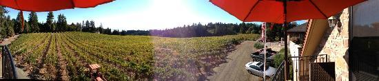 Schweiger Vineyards: the amazing view from the patio!!