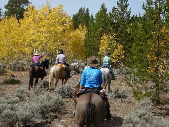 Blue Sky Sage Horseback Riding Adventures: Beautiful Fall Colors