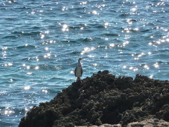Hotel Som Fona: sea bird on rocks