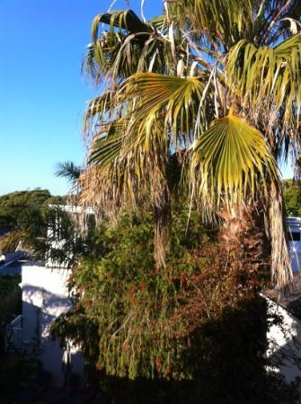 Blackheath Lodge: View from bedroom
