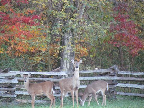 Pea Ridge National Military Park: October 16 2012. Early risers in the park.