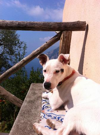 Rifugio degli Dei: It's a dog's life with the best view.