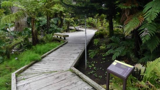 Botanical Garden Ancient Garden Zone Picture Of San Francisco Botanical Garden San