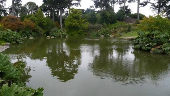 Botanical garden nice pond with carp and ducks picture of san francisco botanical garden for San francisco botanical gardens
