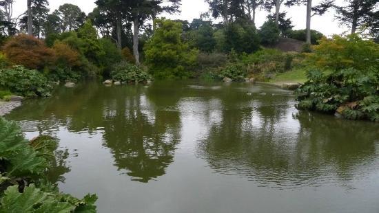 Botanical Garden Nice Pond With Carp And Ducks Picture Of San Francisco Botanical Garden