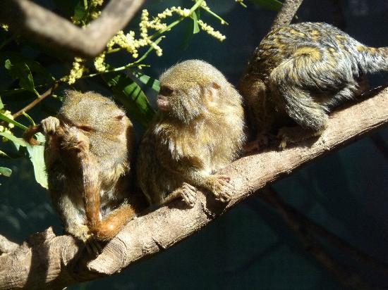 mogo zoo - photo #23