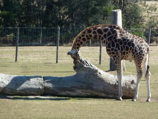 mogo zoo - photo #17