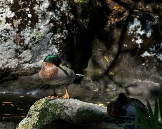 "Wellington Botanic Garden: ""Did you say something?"""