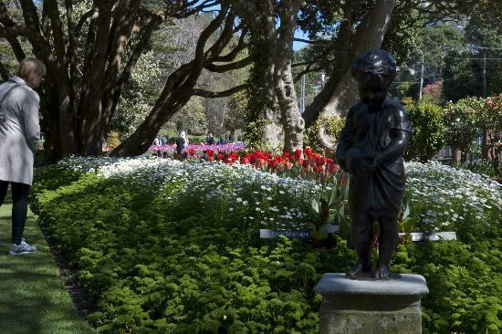 Wellington Botanic Garden: Bloomin' marvelous.