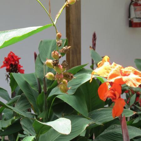 El Albergue Ollantaytambo: El Albergue Gardens