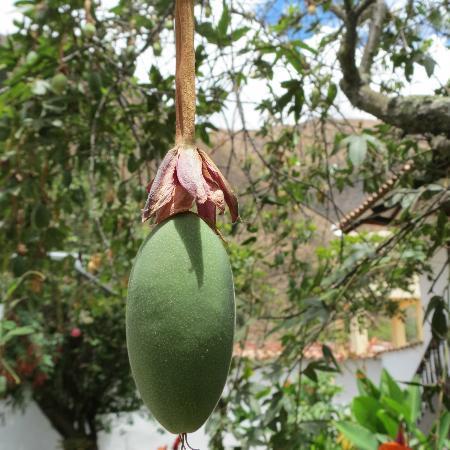 El Albergue Ollantaytambo : El Albergue Gardens