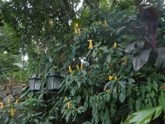 Aratinga Inn: Lanterns in the jungle canopy