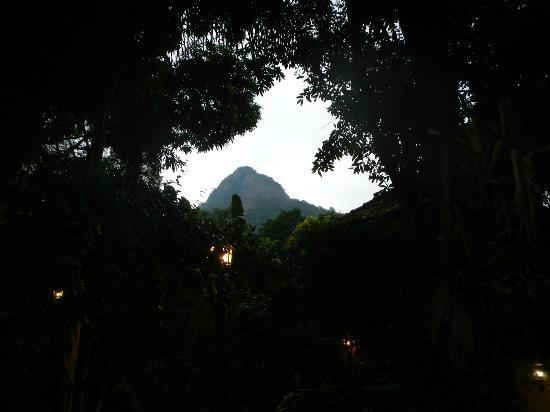 "Aratinga Inn: View from main ""courtyard"" through the jungle towards the highest peak on the Island. Parrots Be"