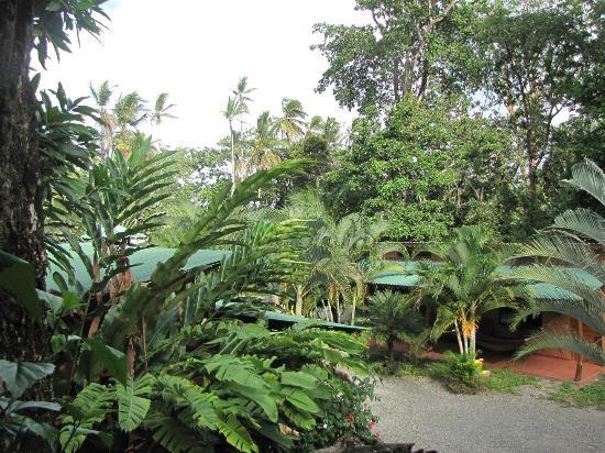 Hotel Caribbean Coconut: Hotel