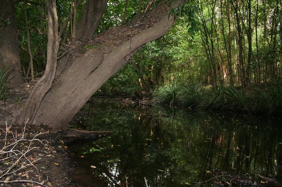 Boolambayte Creek