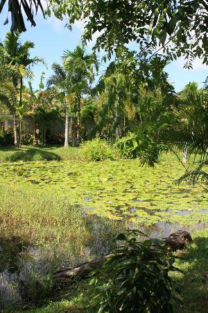Phuket Cleanse: villa pond
