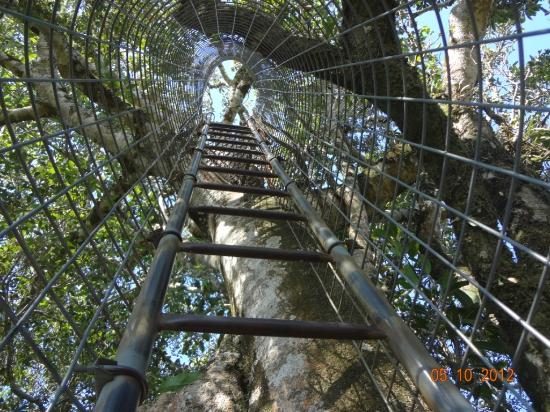 Southern Cross 4WD Tours: Tree top walk