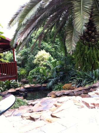The Oasis Boutique Hotel: the lovely Garden
