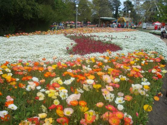 Commonwealth Park: Floriade Display