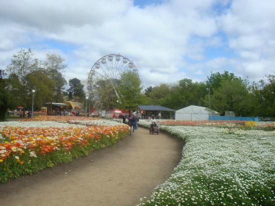 Commonwealth Park: The Ferris Wheel