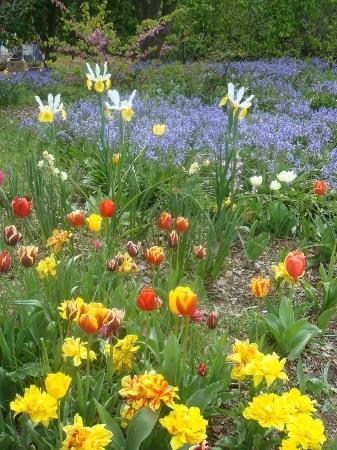 Commonwealth Park: Floriade