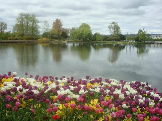 Commonwealth Park: The Lake