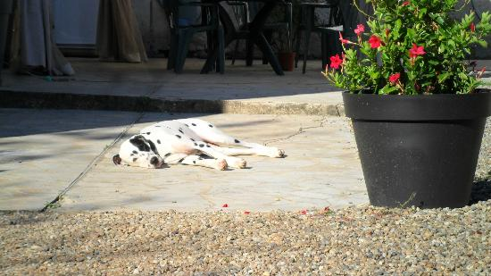 Domaine les Jourdis: hosts' dog