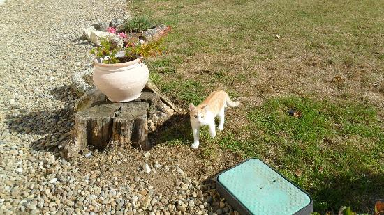 Domaine les Jourdis: hosts' cat Garfield