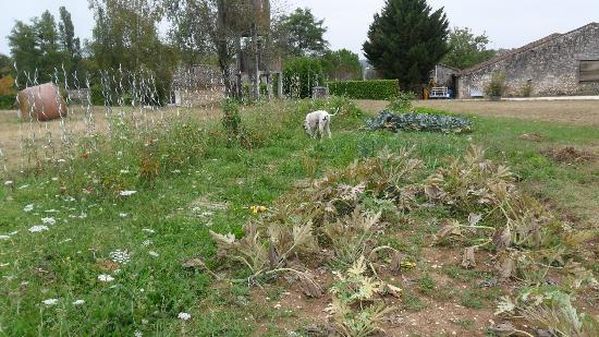 Domaine les Jourdis: veg garden