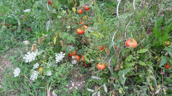 Domaine les Jourdis: home grown veg