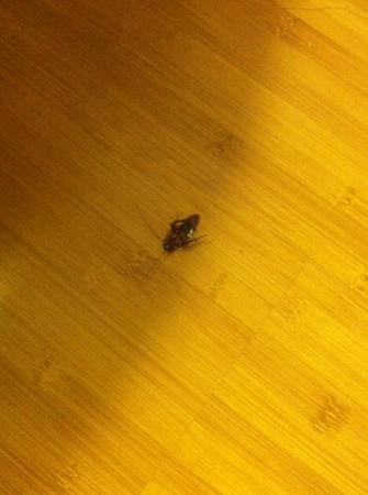 Regal Palms Resort & Spa: 125 bergamo. roaches! gross! response from desk...sorry :/