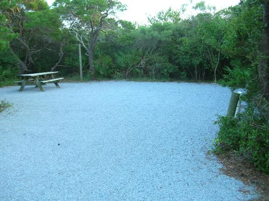 Henderson Beach State Park Campground: Empty campsite, most have privacy but no shade.