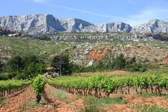 Domaine Terre de Mistral: vineyard