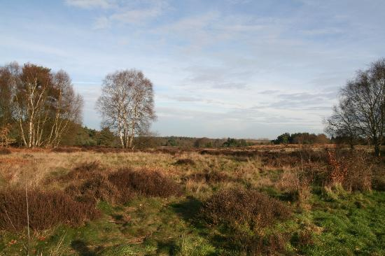Knettishall Heath