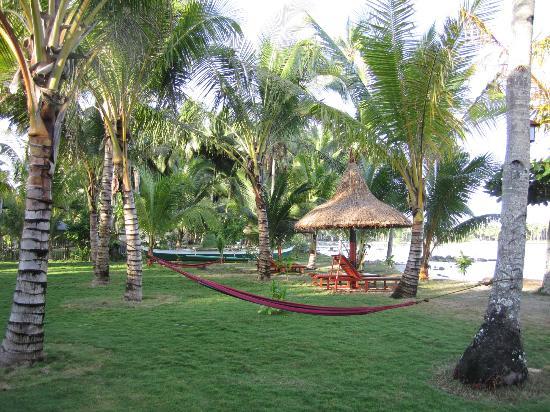 Greenhouse: Beachfront property