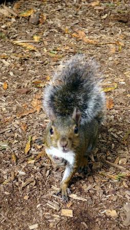 Friendly Squirrels At The Botanical Garden In Golden Gate