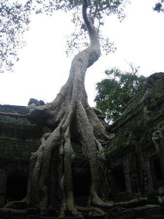 Angkor Wat: la natura si fa strada