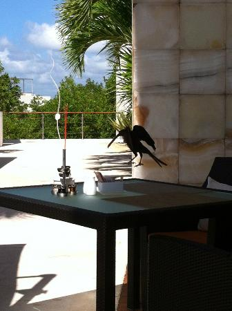 Blue Diamond Riviera Maya by BlueBay照片