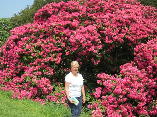 Lismore Castle Gardens & Gallery: een bloemenpracht.
