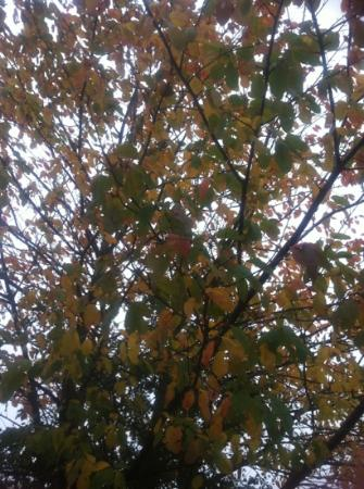 Northycote Farm and Country Park: autumn trees