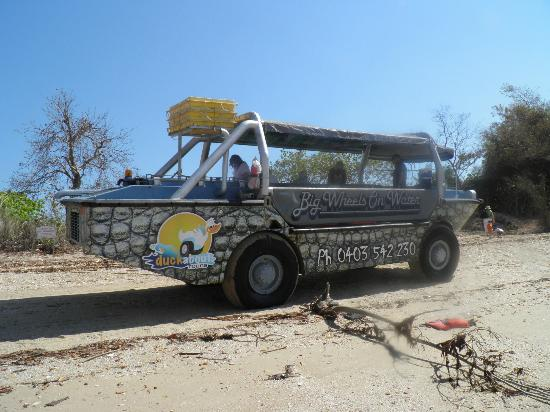 Duck About Tours: CROC on Mica Beach
