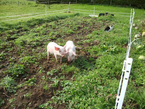 Hawthorn Lodge B & B: Cleaning up our veggie garden!