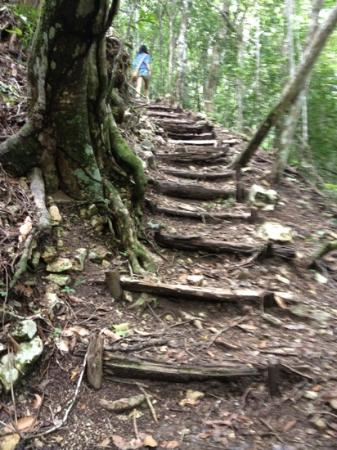 Cerro Biotope Cahui: A walk through the jungle...