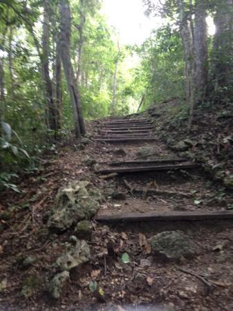 Cerro Biotope Cahui: Toward the Mayan Mirador