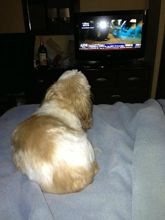 Extended Stay America - Fishkill - Westage Center: my little boy watching tv